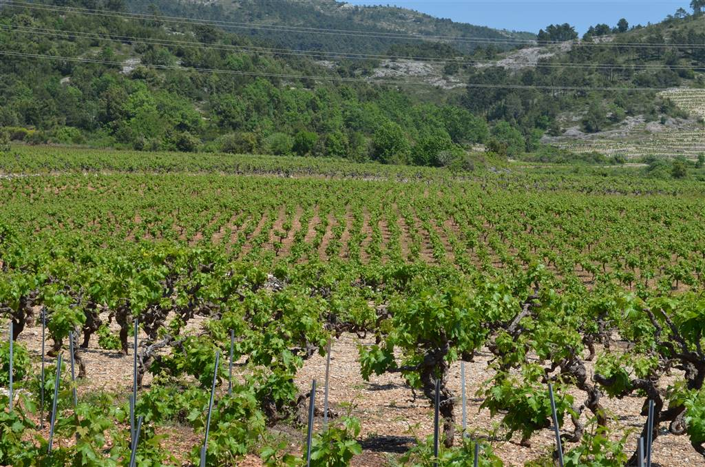 08-wineyards-on-peljesac
